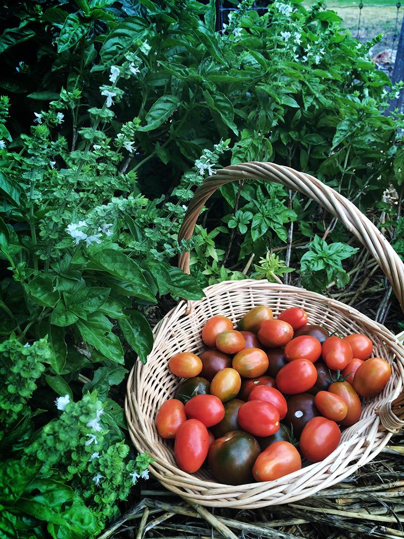 tomato-in-basket